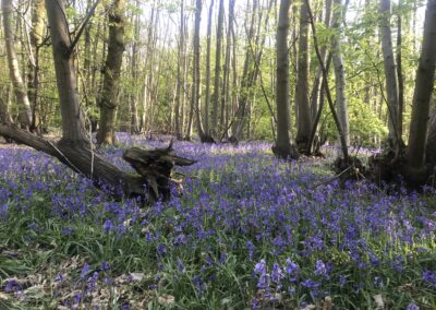 Retreat in bluebell wood